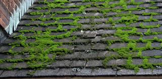 Moss How To Remove Moss From A Roof Today U0027s Homeowner