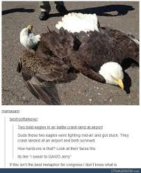 Funny Eagles Meme - two bald eagles in air battle crash land at an airport murica
