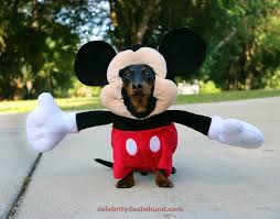 funny dog costumes halloween online shopping mall tag u2013 funny halloween dog costumes