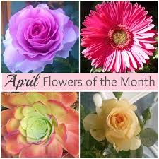 Flowers Of The Month April Flowers Of The Month U2013 The Purple Poncho