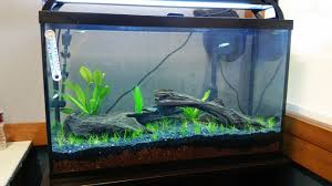aquarium design exle how to carpet dwarf hairgrass as fast as possible without co2 system