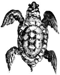 the history of sea turtle soup in baja california