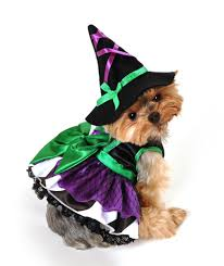 costumes for your dog doggie dog coats my online pet shop
