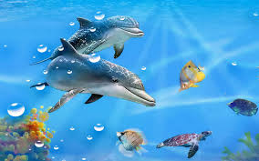 free live wallpaper of dolphins live dolphins wallpapers 47 pc