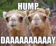 Hump Day Camel Meme - hump day camel pictures photos images and pics for facebook