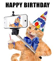 Cat Lover Meme - joke4fun memes happy birthday you cat lover