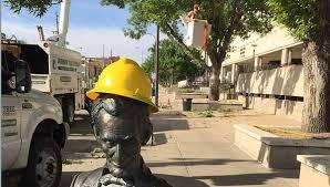 the johnson tree company rapid city sd