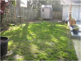 landscape inspiration backyards impressive outstanding small backyard landscaping
