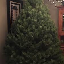 ben u0027s christmas tree farm 10 reviews christmas trees 7720