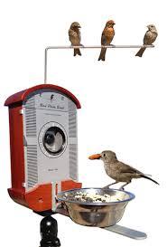 bird photo booth captures fascinating close ups of birds eating