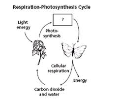 Photosynthesis And Cellular Respiration Worksheet Photosynthesis And Cellular Respiration Quiz 4 Proprofs Quiz