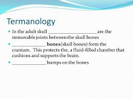 Bones That Form The Cranium Wednesday Dec 7 Bone Classification The Skeleton Can Be Divided