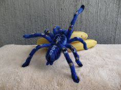 another brightly colored tarantula i didn t existed before i