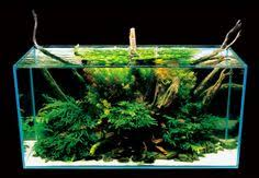 Takashi Amano Aquascaping Techniques Takashi Amano Nature Aquarium Aquascape Aquascapes Pinterest