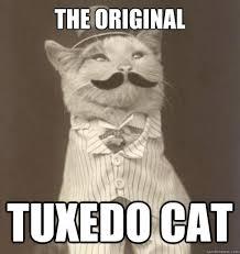 Tuxedo Meme - the original tuxedo cat original business cat quickmeme