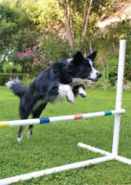 Backyard Agility Course Playscapes Marin Magazine July 2009 Marin County California