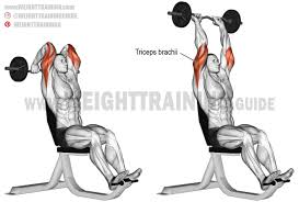 overhead ez bar triceps extension exercise instructions and video