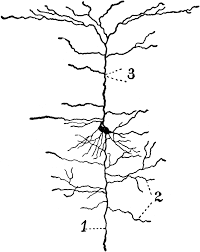 neuron cliparts free download clip art free clip art on
