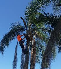 brisbane northside classic tree lopping call 0417764517