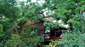 tree house hideaway natural world safaris
