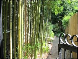 backyards wondrous backyard bamboo backyard pictures backyard x