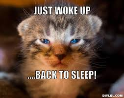 Sleeping Cat Meme - sleeping cat meme generator image memes at relatably com