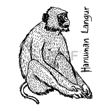 3 028 monkey doodle stock illustrations cliparts and royalty free