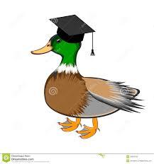 a funny duck in a graduation cap stock photos image 35669793
