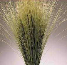dried dune grass ornamental dune grass