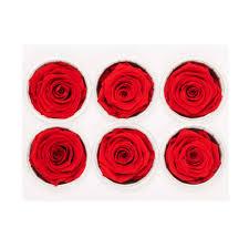 bulk roses bulk box of 6 preserved roses