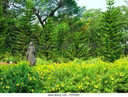 flowers garden india stock photos u0026 flowers garden india stock