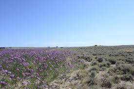 colorado native plant society colorado plateau native plant program 2016 meeting presentations