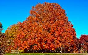 minnesota seasons autumnal wallpapers