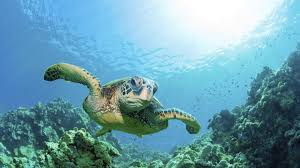 how to see baby sea turtles at a national park national park