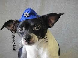 hannukah hat hanukkah hat cat or dog accessories hats posh puppy boutique
