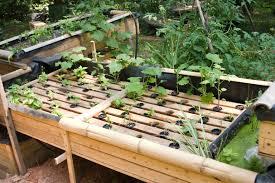 backyard aquaponics tilapia outdoor furniture design and ideas