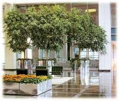 plant for office office plant rentals san francisco oakland pleasanton