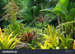 Cairns Botanical Garden by Tropical Garden In Cairns North Queensland Australia Stock Photo