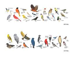 types of birds with names
