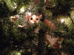 Cat Climbing Christmas Tree Video These 20 Cats In Christmas Trees Will Give You Life For The Win