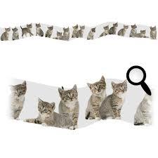 frise adhésive chambre bébé impressionnant frise adhesive chambre bebe 9 stickers chats