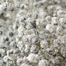 baby s breath salt and pepper tinted baby s breath
