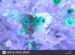 a cool toned psychedelic image of butterfly and zinnia flowers