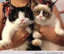 Unamused Cat Meme - pics grumpy cat