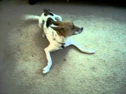 Hyper Dog Meme - prissy the very excited dog meme youtube