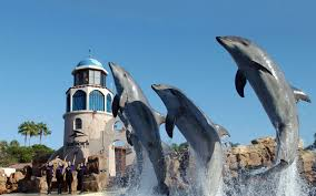Sea World San Antonio Map by Seaworld San Antonio Animals Rides U0026 Family Fun