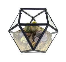 cactus terrarium kit stunning large geometric design uk u2013 the