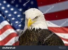 Eagle American Flag Bald Eagle American Flag Out Focus Stock Photo 105959489