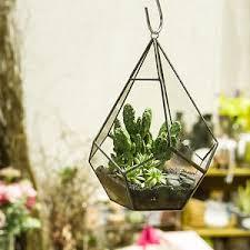 hanging air plant modern artistic hanging air plant teardrop diamond glass geometric