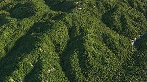 forest corona renderer